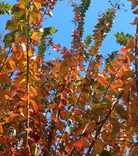 Fall Color, PensacolaStyle
