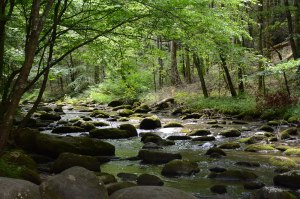 river-out-of-cades-cove