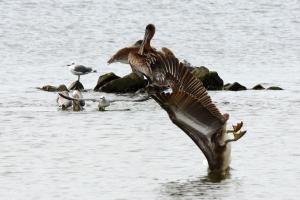 diving peli
