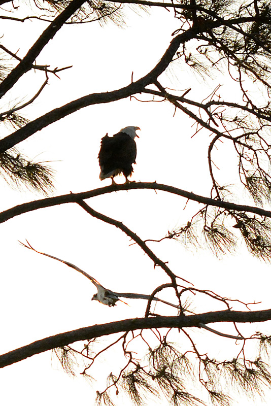 and-then-I-saw-the-eagle