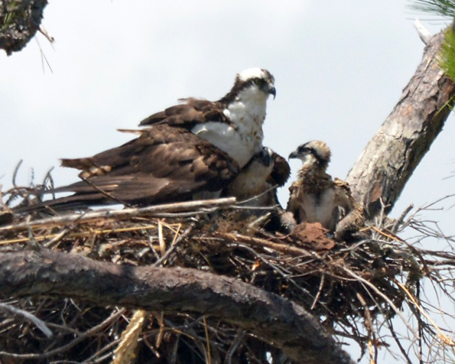 two-more-in-nest-#3