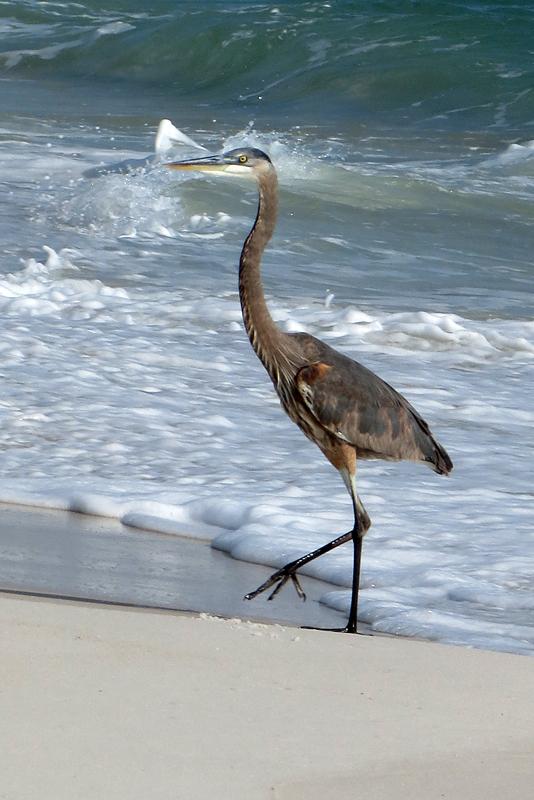 beach-stroll