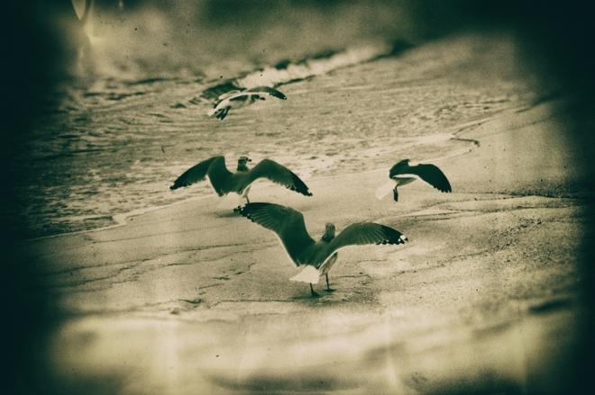 wet-plate-5-gulls