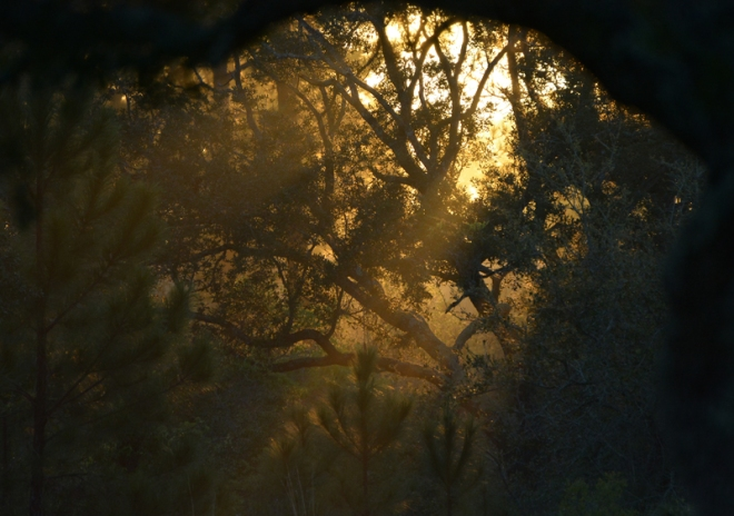 sunrise-thru-the-woods