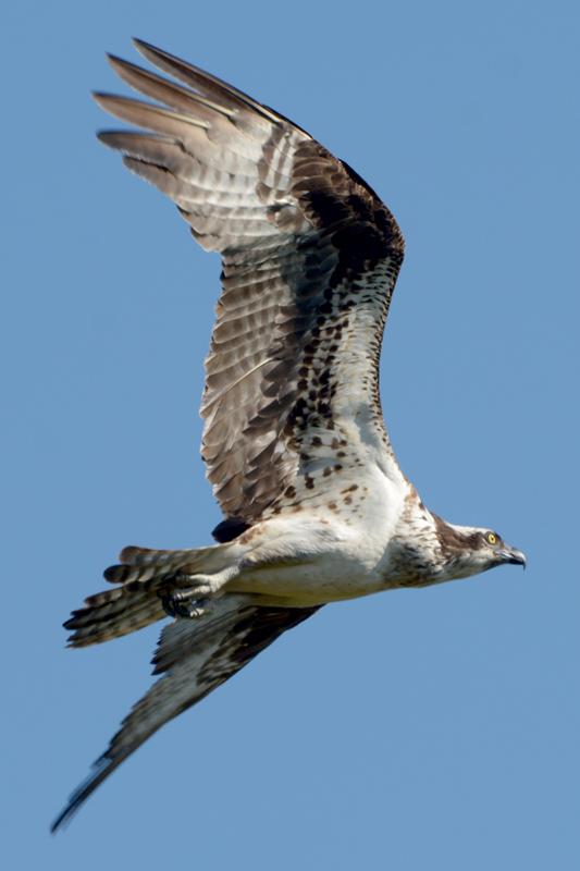 wing-1