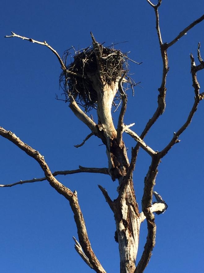 bib-mama'sn-nest