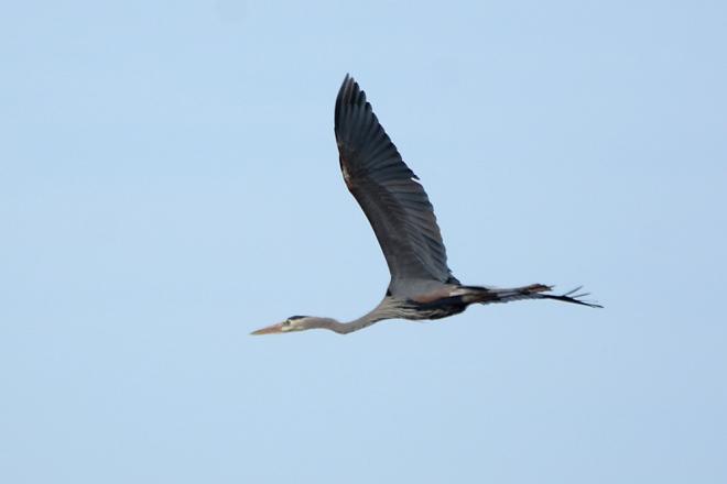 GBH-soaring