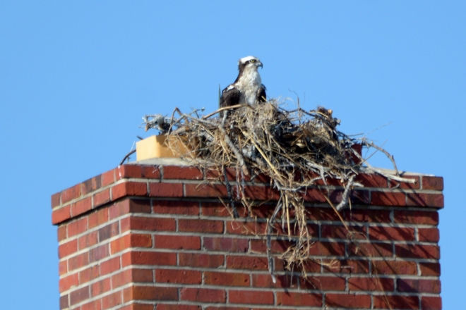 nest-in-the-chimney