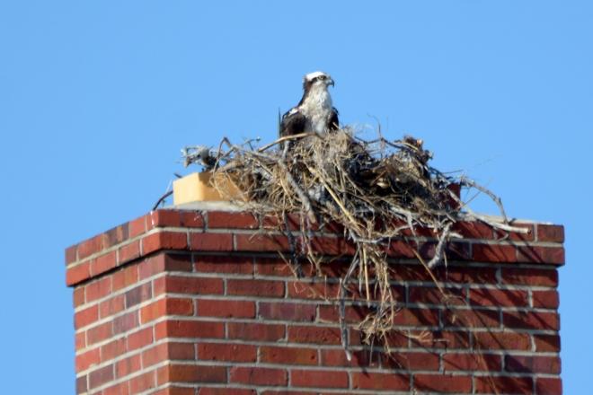 nest-in-the-chimney