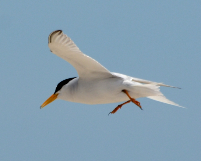 flight-tern