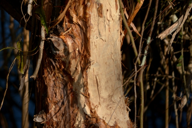 beaver-marks