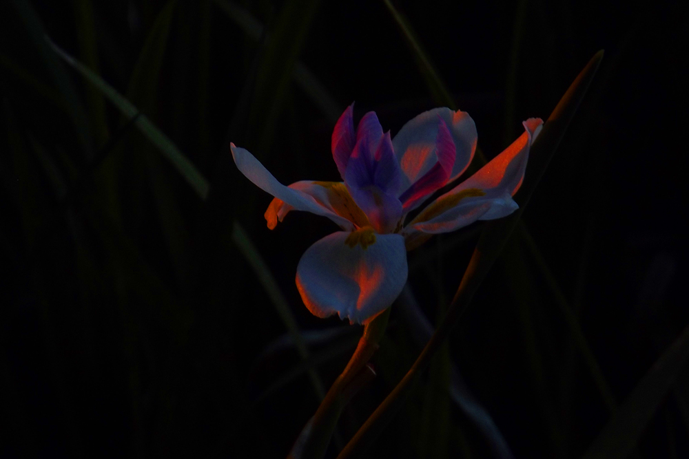 morning-light-on-flower