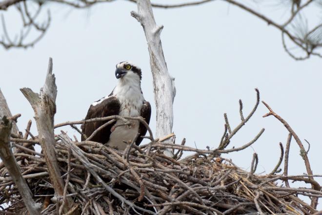 watchful-mama